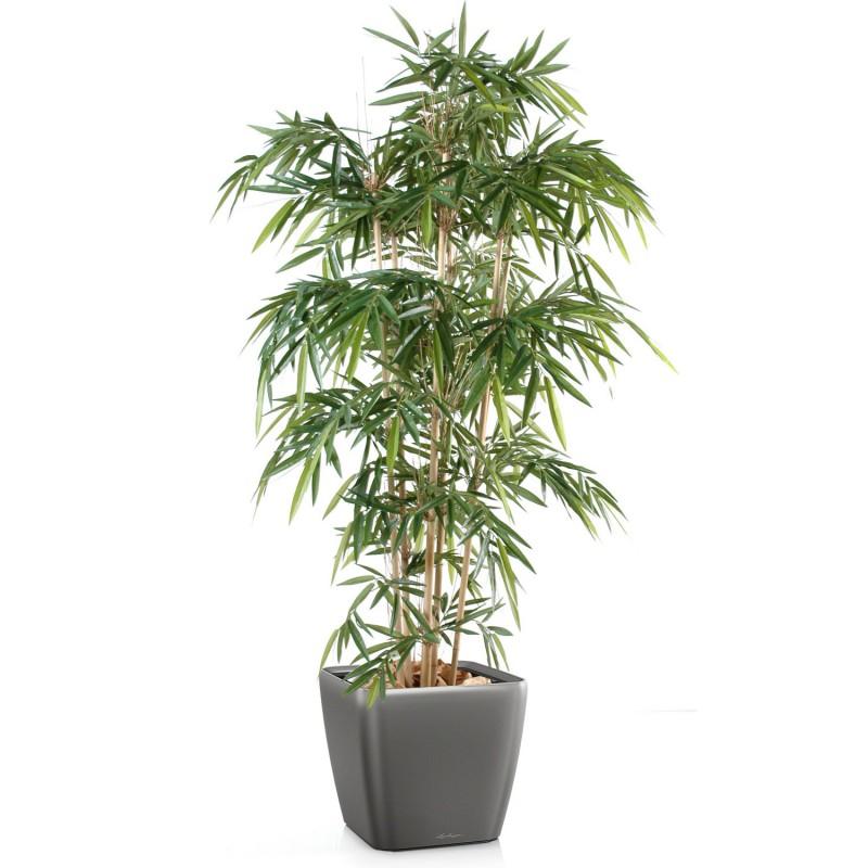 Quel type de bambou synth tique int rieur for Bambou synthetique exterieur